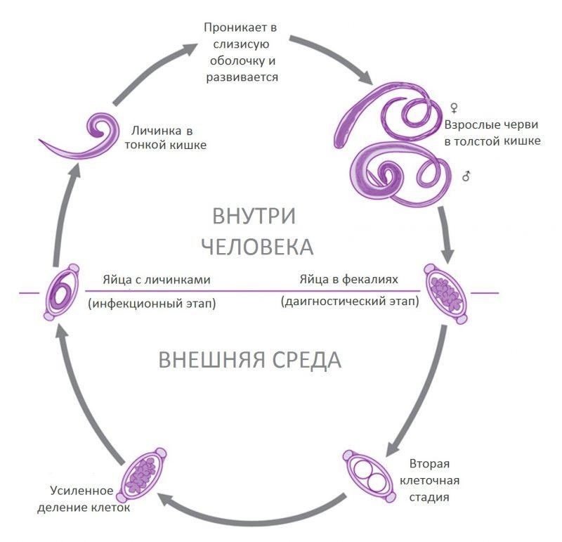 Жизненный цикл паразитов