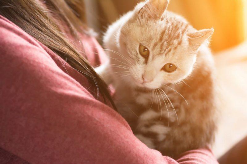 токсопламоз от кошки