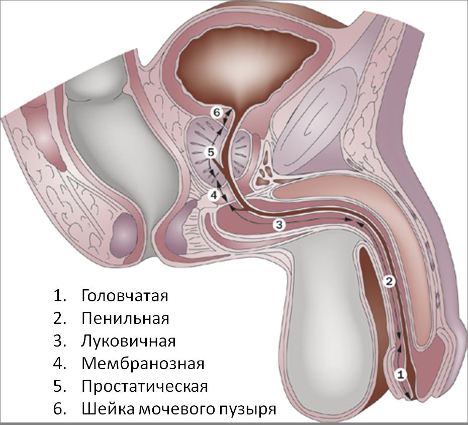 Простатит трихоманадный простатиты лечение новосибирск