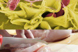Питание при сальмонеллезе у детей и взрослых