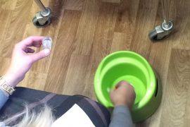 Как правильно сдавать кал на лямблии: подготовка к анализу