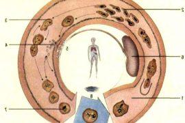 Шигеллез: особенности протекания, причины, симптоматика, лечение