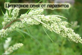 Цитварное семя от паразитов