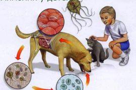Лечение лямблий в кале ребенка