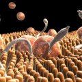 Описторхоз у человека: симптомы болезни и лечение